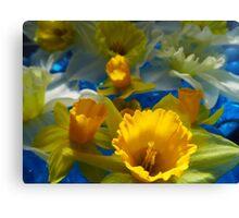 Daffodils In Blue Canvas Print
