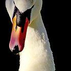 Mute Swan by Tamara  Kenneally