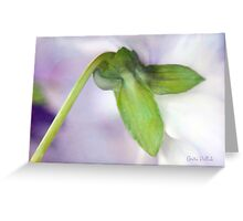 Soft Pansy Greeting Card