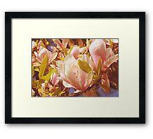 Magnolia flowers Framed Print