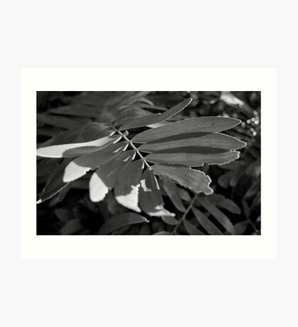 Leafy Textures Art Print