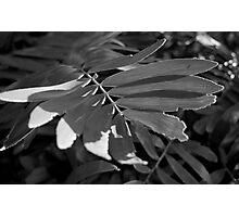 Leafy Textures Photographic Print