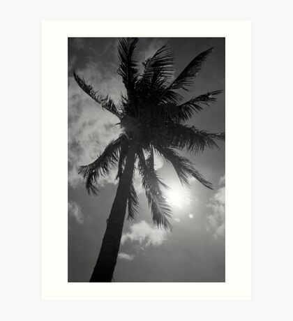 Palm Flare Art Print