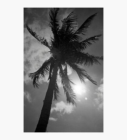 Palm Flare Photographic Print