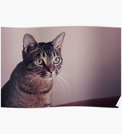Zeus The Cat Poster