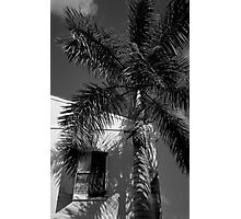 Tropical Shade Photographic Print