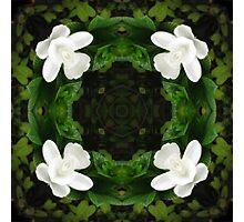 Beautiful Gardenia 5 Kaleidoscope 6 Photographic Print