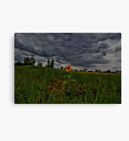 I Stand Alone Canvas Print