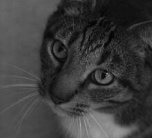 Cat [1] by Jillian S.