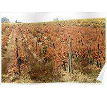 Chianti shire landscape(Tuscany) italy Poster