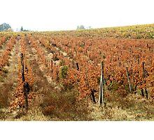 Chianti shire landscape(Tuscany) italy Photographic Print