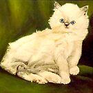 Rag Doll Kitten by Donny Clark
