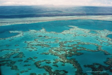 Great Barrier Reef  Vicki Ferrari