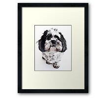Max is alive and very cute! Framed Print