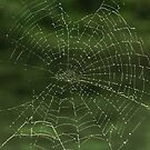 The Diamond Web by Sarah Tweedie