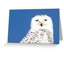 Snowy Owl stare Greeting Card