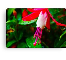 Rain in Pink Canvas Print