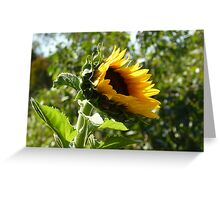 Sunflower freedom Greeting Card