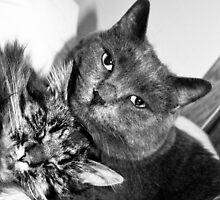 Kitty Buddies by evergleammm