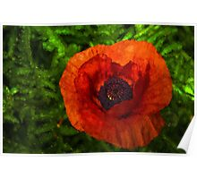 Red Poppy - Vibrant, Bold and Cheerful Poster