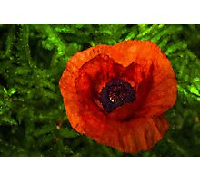 Red Poppy - Vibrant, Bold and Cheerful Photographic Print