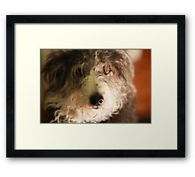 Maggie May  Framed Print