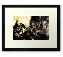 Two Cats Framed Print