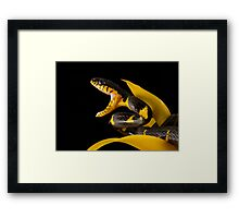 Hungry Framed Print