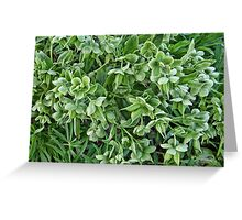 Green Flowers Greeting Card