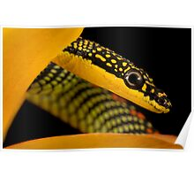 Paradise snake headshot Poster
