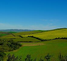 Canola fields in the Napier Valley by Martina  Stoecker
