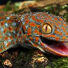 The Tokay gecko up close by AngiNelson