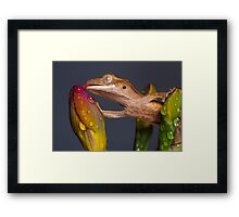 Drinking Crested gecko Framed Print