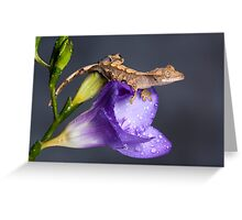 Crested gecko baby on purple freesia Greeting Card