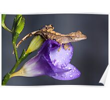Crested gecko baby on purple freesia Poster