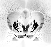 Orchid Macro in Black and White by Andrew Jones