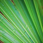 Palm After the Rain by designingjudy