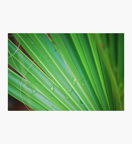 Palm After the Rain Photographic Print