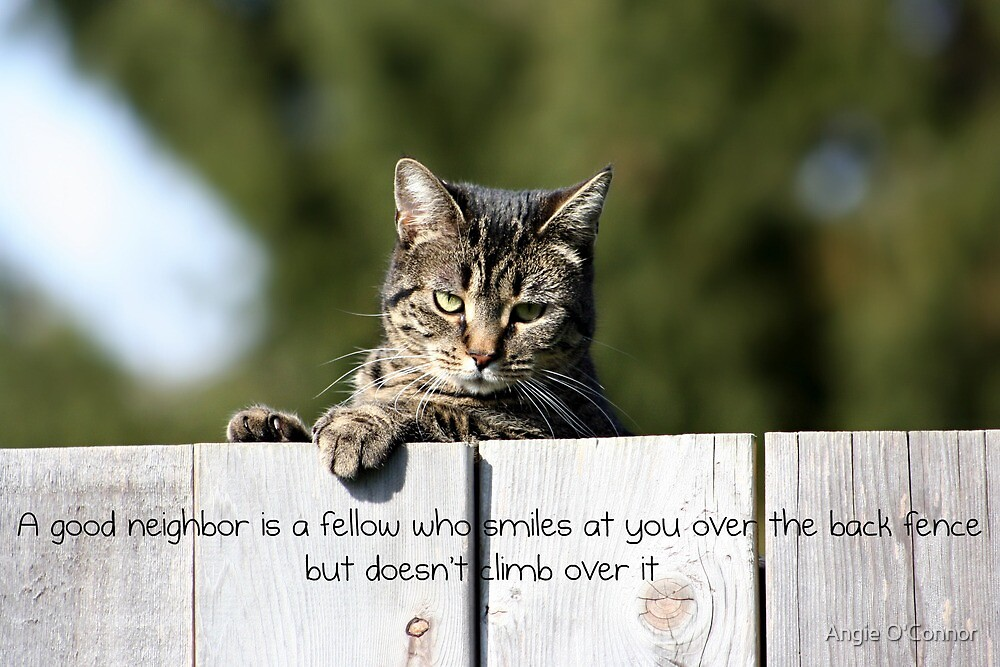 A Good Neighbor by Angie O'Connor