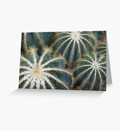 Sharp Beauty - Elegantly Ordered Cactus Needles Greeting Card
