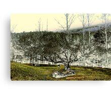 Stones & Trees Canvas Print