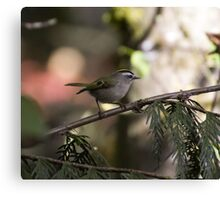 Golden Crowned Kinglet Canvas Print