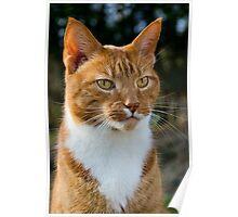 Ginger Kitty ~ Mangerton Mill Poster