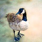 Goosey Goosey Gander by Loren Goldenberg-Kosbab