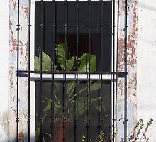 Window With Plant - Ventana Con Planta by Bernhard Matejka