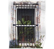 Window With Plant - Ventana Con Planta Poster