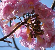 Beauty In Pink - Belleza En Rosa by Bernhard Matejka
