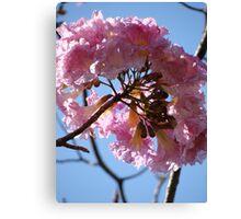 Beauty In Pink - Belleza En Rosa Canvas Print