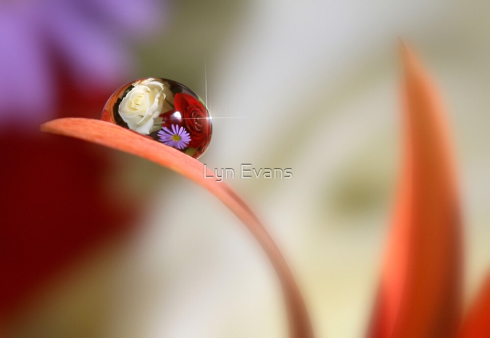 Floral raindrop by Lyn Evans