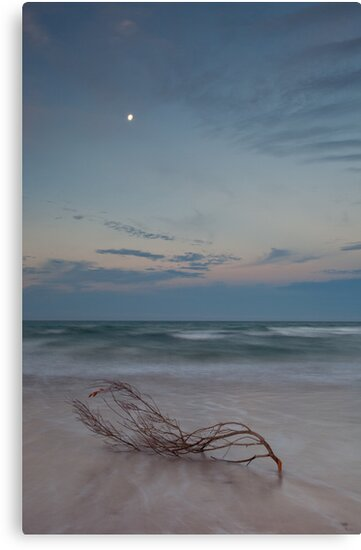Still Adrift by Kylie  Sheahen